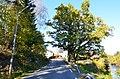 Kjoseeika-medium-Fylkesmannen-i-Vestfold.jpg