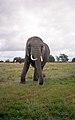 Knowsley Safari Park, Prescot - panoramio (4).jpg