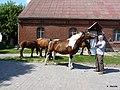 Konie na podwórku - panoramio.jpg