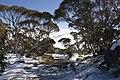 Kosciuszko National Park NSW 2627, Australia - panoramio (216).jpg