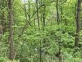 Kosmaj forest 15.jpg