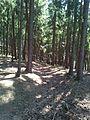 Kostelík (525 m), úvozová cesta (001).jpg