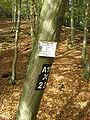 Kurkölner Weg im Naafbachtal.jpg