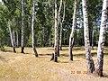 Kursk region. - panoramio.jpg