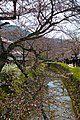 Kyoto, 桜, sakura, Philosophers Walk - panoramio.jpg