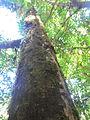 La Amistad Panama Biosphere Reserve - Parque Nacional Volcan Baru (a core zone) 26.JPG