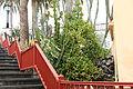La Palma - San Andres y Sauces - San Andres - Calle Plaza - Euphorbia breviarticulata + Euphorbia lactea 01 ies.jpg