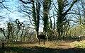 Lady Spencer's Walk - geograph.org.uk - 803564.jpg