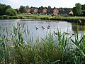 Lake in Hazelslade Local Nature Reserve - geograph.org.uk - 194362.jpg
