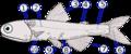 Lampanyctodes hectoris (Hector's lanternfish)2.png