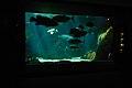 Large Fish Tank @ Honolulu Aquarium (4671605584).jpg