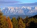 Larix decidua forest Dolomites.jpg