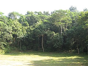 Lawachara National Park03.jpg