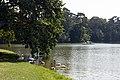 Laxenburg Schlossteich 2016-08-28 01.jpg