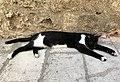 Lazy cat in Rhodes City.jpg
