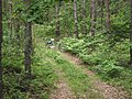 Leśne ścieżki - panoramio.jpg
