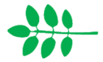 Leaf morphology odd pinnate.png