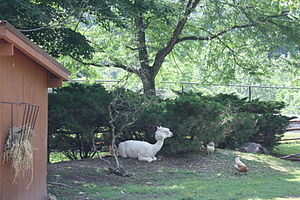 Lehigh Valley Zoo - Image: Lehigh Valley Zoo 07