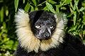 Lemur (26726445428).jpg
