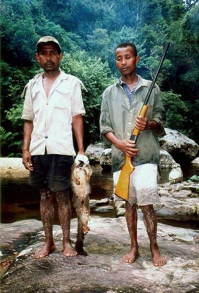 File:Lemur poaching 004.jpg