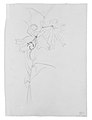 "Lily, Study for ""Carnation, Lily, Lily, Rose"" MET ap50.130.124 recto.jpg"