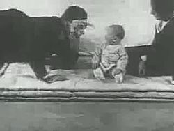 Fil:Little Albert experiment (1920).webm