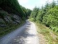 Llethr Gwinau, forest road - geograph.org.uk - 839793.jpg