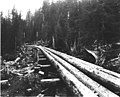 Log railroad bridge under construction, U S Army Signal Corps Railroad, Spruce Production Division, Lake Crescent area (CURTIS 522).jpeg