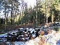 Logpile, Higher Kiddens, Haldon Forest Park - geograph.org.uk - 1651881.jpg