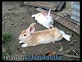 Los Conejos (La Blanca y La Ruba).jpg