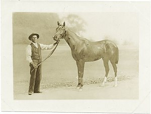 Luke Blackburn (horse) - Luke Blackburn circa 1880