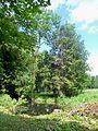Méry-sur-Oise (95), parc du château de Méry, la rivière anglaise (2).jpg