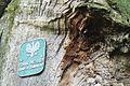 MOs810, WG 2014 66 Puszcza Notecka west (Quercus robur, Lipki Male, monument (4).JPG