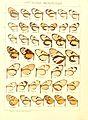 Macrolepidoptera15seit 0091.jpg