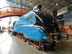 Mallard at York, Aug 17 (1).jpg