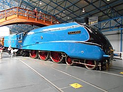 Mallard at York, Aug 17 (3).jpg