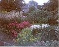 Malleny House gardens - geograph.org.uk - 1299371.jpg