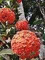 Mangkuk mangkuk bunga.jpg