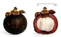 Mangosteen scale v2.jpg