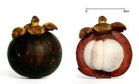 мангустин растение фото