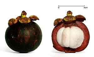 English: Purple mangosteen fruit (Garcinia man...