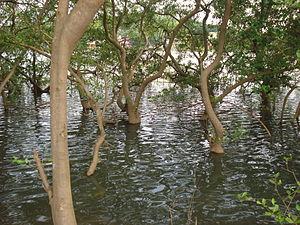 Pappinisseri - Image: Mangrove park