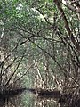 Mangrove swamp - panoramio (1).jpg