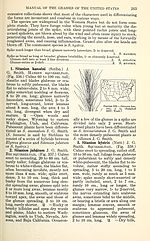 Manual of the grasses of the United States (Page 263) BHL42020902.jpg