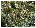 March Spring Emmendingen - Master Season Rhine Valley Photography - panoramio (3).jpg