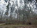 Marienhöhe Nördlingen im Februar - panoramio.jpg