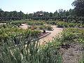 McGovern Gardens (2015) - 3.jpg