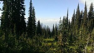 Mount Revelstoke National Park - Image: Meadows sky parkway