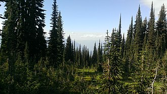Mount Revelstoke National Park - Image: Meadows sky parkway