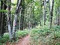 Medvednica Nature Park.jpg